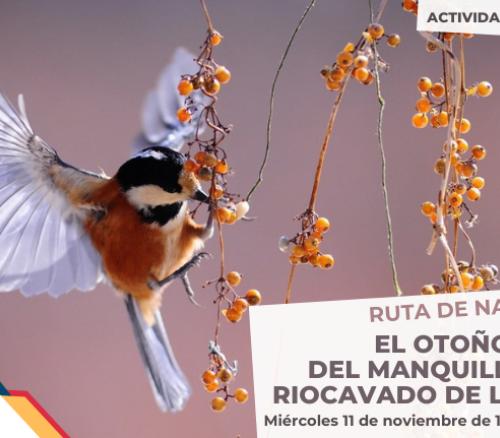 """""""El otoño: puerto del Manquillo hasta Riocavado de la Sierra"""""""